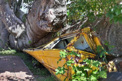 Dieser Baum wurde von einem tropischen Sturm auf einen Schulbus geworfen (der Bus war leer)