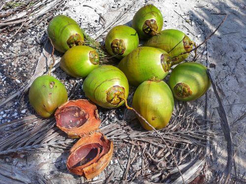 Jede Kokosnuss schenkt uns 250 bis 300ml feinstes Kokoswasser