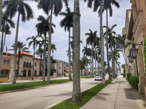 Der Name passt, jede Menge Palmen, hier auf dem Royal Palm Way