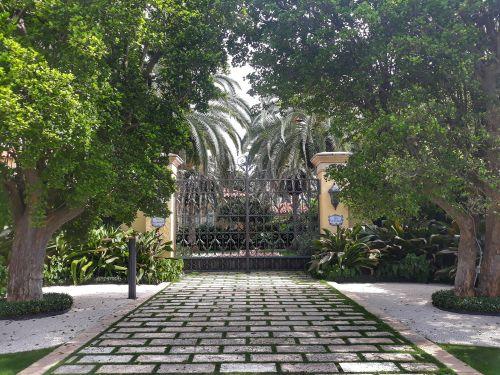 In Palm Beach gibt es viele schöne große alte Bäume