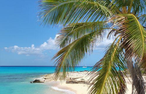 Eine der wenigen Palmen der Bahamas