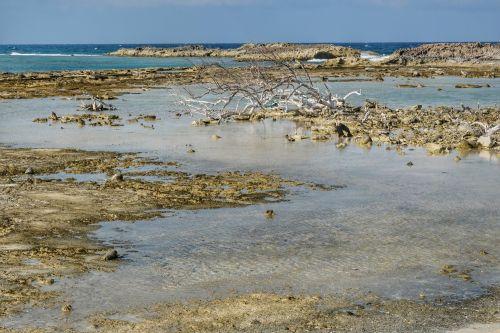 Bei Ebbe kommen die flachen, scharfkantigen Kalkstein-Felsen zum Vorschein
