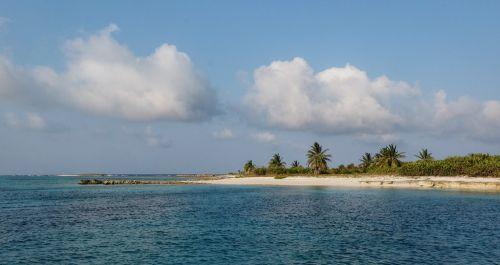 Kokos-Palmen sind sehr selten auf den Bahamas, wir vermuten, dass diese hier angepflanzt wurden