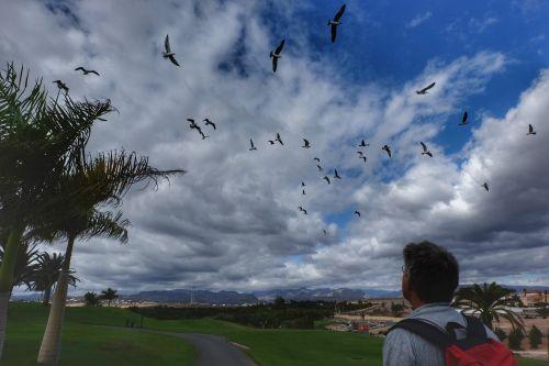 Auf dem Golfplatz fliegen Vögel auf
