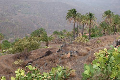 Terrassen mit Palmen und Kaktusfeigen