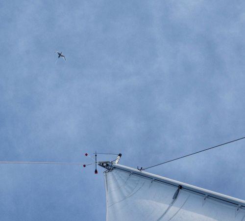 Hoch oben folgt uns ein Weißschwanz-Tropikvogel - das letzte Foto vom stehenden Großmast